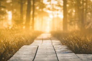 Psalm 1 Delight in God's presence