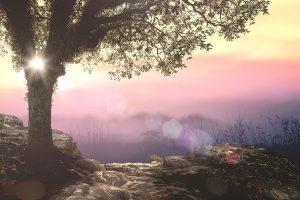 Garden of Eden representation